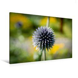 Premium Textil-Leinwand 120 x 80 cm Quer-Format Flower-Power | Wandbild, HD-Bild auf Keilrahmen, Fertigbild auf hochwertigem Vlies, Leinwanddruck von Andreas Levi – PHOTOmedia++ von Levi - PHOTOmedia++,  Andreas