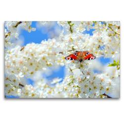 Premium Textil-Leinwand 120 x 80 cm Quer-Format Frühlingsgefühle | Wandbild, HD-Bild auf Keilrahmen, Fertigbild auf hochwertigem Vlies, Leinwanddruck von GUGIGEI