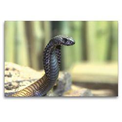 Premium Textil-Leinwand 120 x 80 cm Quer-Format Gefährliche Schlangen – Arabische Kobra | Wandbild, HD-Bild auf Keilrahmen, Fertigbild auf hochwertigem Vlies, Leinwanddruck von Michael Herzog