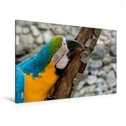 Premium Textil-Leinwand 120 x 80 cm Quer-Format Gelbbrustara   Wandbild, HD-Bild auf Keilrahmen, Fertigbild auf hochwertigem Vlies, Leinwanddruck von Angelika Beuck von Beuck,  Angelika