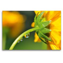 Premium Textil-Leinwand 120 x 80 cm Quer-Format Gelbe Blüte mit Wassertropfen und Spiegelung | Wandbild, HD-Bild auf Keilrahmen, Fertigbild auf hochwertigem Vlies, Leinwanddruck von Susanne Herppich