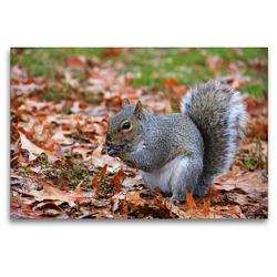 Premium Textil-Leinwand 120 x 80 cm Quer-Format Grauhörnchen im Central Park New York (USA) | Wandbild, HD-Bild auf Keilrahmen, Fertigbild auf hochwertigem Vlies, Leinwanddruck von Jana Thiem-Eberitsch