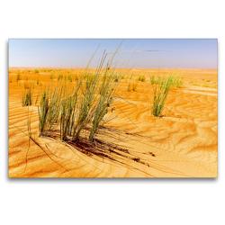 Premium Textil-Leinwand 120 x 80 cm Quer-Format Grüne Gräser der Wüste | Wandbild, HD-Bild auf Keilrahmen, Fertigbild auf hochwertigem Vlies, Leinwanddruck von Jürgen Feuerer