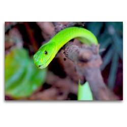 Premium Textil-Leinwand 120 x 80 cm Quer-Format Grüne Mamba | Wandbild, HD-Bild auf Keilrahmen, Fertigbild auf hochwertigem Vlies, Leinwanddruck von Rose Hurley