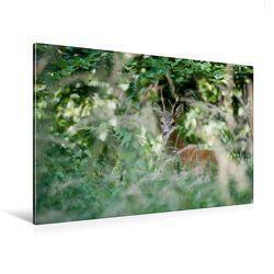 Premium Textil-Leinwand 120 x 80 cm Quer-Format Heimlicher Rehbock | Wandbild, HD-Bild auf Keilrahmen, Fertigbild auf hochwertigem Vlies, Leinwanddruck von Ingo Gerlach