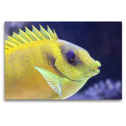 Premium Textil-Leinwand 120 x 80 cm Quer-Format Im Meeres-Aquarium | Wandbild, HD-Bild auf Keilrahmen, Fertigbild auf hochwertigem Vlies, Leinwanddruck von Rose Hurley