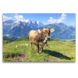 Premium Textil-Leinwand 120 x 80 cm Quer-Format Junge Kuh auf der Alm | Wandbild, HD-Bild auf Keilrahmen, Fertigbild auf hochwertigem Vlies, Leinwanddruck von Rose Hurley
