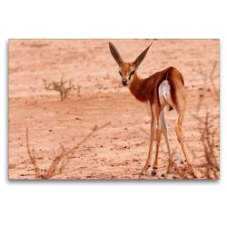 Premium Textil-Leinwand 120 x 80 cm Quer-Format Junges Impala in der Etosha Pfanne, Afrika | Wandbild, HD-Bild auf Keilrahmen, Fertigbild auf hochwertigem Vlies, Leinwanddruck von Birgit Scharnhorst