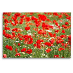 Premium Textil-Leinwand 120 x 80 cm Quer-Format Klatschmohn-Feld | Wandbild, HD-Bild auf Keilrahmen, Fertigbild auf hochwertigem Vlies, Leinwanddruck von Elisabeth Schittenhelm