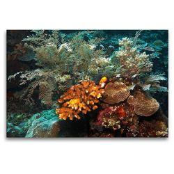 Premium Textil-Leinwand 120 x 80 cm Quer-Format Korallen | Wandbild, HD-Bild auf Keilrahmen, Fertigbild auf hochwertigem Vlies, Leinwanddruck von Martin Rauchenwald