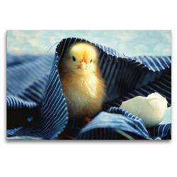 Premium Textil-Leinwand 120 x 80 cm Quer-Format Küken unter der blauen Decke | Wandbild, HD-Bild auf Keilrahmen, Fertigbild auf hochwertigem Vlies, Leinwanddruck von Tanja Riedel