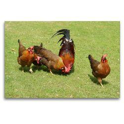 Premium Textil-Leinwand 120 x 80 cm Quer-Format Kunterbunte Hühnerschar | Wandbild, HD-Bild auf Keilrahmen, Fertigbild auf hochwertigem Vlies, Leinwanddruck von kattobello