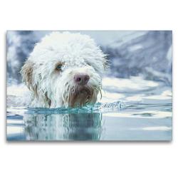 Premium Textil-Leinwand 120 x 80 cm Quer-Format Lagotto Romagnolo sitzt im kalten, türkisblauen Winterwasser | Wandbild, HD-Bild auf Keilrahmen, Fertigbild auf hochwertigem Vlies, Leinwanddruck von Wuffclick-pic