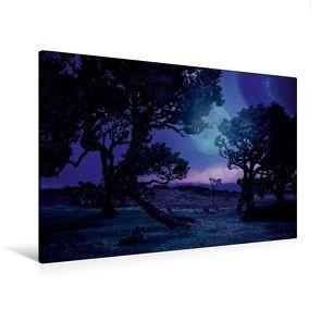 Premium Textil-Leinwand 120 x 80 cm Quer-Format Lorbeerbäume bei Nacht   Wandbild, HD-Bild auf Keilrahmen, Fertigbild auf hochwertigem Vlies, Leinwanddruck von Val Thoermer von Thoermer,  Val