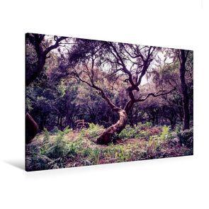 Premium Textil-Leinwand 120 x 80 cm Quer-Format Lorbeerbaum auf Madeira   Wandbild, HD-Bild auf Keilrahmen, Fertigbild auf hochwertigem Vlies, Leinwanddruck von Val Thoermer von Thoermer,  Val