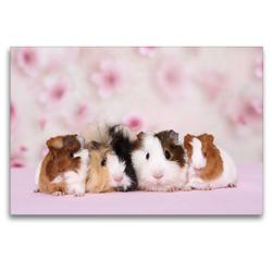 Premium Textil-Leinwand 120 x 80 cm Quer-Format Meerschweinchen | Wandbild, HD-Bild auf Keilrahmen, Fertigbild auf hochwertigem Vlies, Leinwanddruck von Jeanette Hutfluss