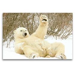 Premium Textil-Leinwand 120 x 80 cm Quer-Format Mit Gemütlichkeit: Eisbär grüßt völlig relaxed mit einer Pfote.   Wandbild, HD-Bild auf Keilrahmen, Fertigbild auf hochwertigem Vlies, Leinwanddruck von CALVENDO