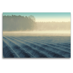 Premium Textil-Leinwand 120 x 80 cm Quer-Format Nebelmorgen über dem Spargelfeld von Tanja Riedel | Wandbild, HD-Bild auf Keilrahmen, Fertigbild auf hochwertigem Vlies, Leinwanddruck von N N