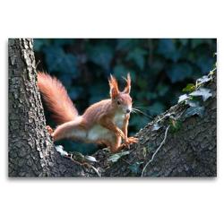 Premium Textil-Leinwand 120 x 80 cm Quer-Format Neugieriges Eichhörnchen   Wandbild, HD-Bild auf Keilrahmen, Fertigbild auf hochwertigem Vlies, Leinwanddruck von Margret Brackhan
