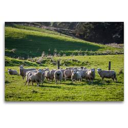 Premium Textil-Leinwand 120 x 80 cm Quer-Format Neuseeländische Schafsherde | Wandbild, HD-Bild auf Keilrahmen, Fertigbild auf hochwertigem Vlies, Leinwanddruck von Art is Passion Photodesign by Silvia Höld