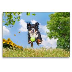 Premium Textil-Leinwand 120 x 80 cm Quer-Format Nur fliegen ist schöner | Wandbild, HD-Bild auf Keilrahmen, Fertigbild auf hochwertigem Vlies, Leinwanddruck von Sigrid Starick