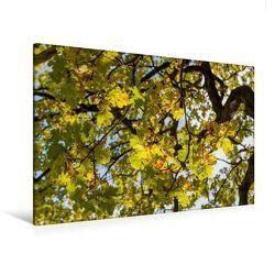 Premium Textil-Leinwand 120 x 80 cm Quer-Format Oktober: Der Herbst schickt seine goldene Farbe durch die gelben Blätter. | Wandbild, HD-Bild auf Keilrahmen, Fertigbild auf hochwertigem Vlies, Leinwanddruck von Ingo Gerlach GDT von Gerlach GDT,  Ingo