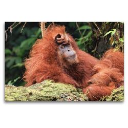 Premium Textil-Leinwand 120 x 80 cm Quer-Format Orang-Utan im Gunung Leuser Nationalpark,Indonesien | Wandbild, HD-Bild auf Keilrahmen, Fertigbild auf hochwertigem Vlies, Leinwanddruck von Uta Depner