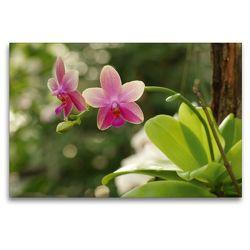 Premium Textil-Leinwand 120 x 80 cm Quer-Format Orchidee rosé | Wandbild, HD-Bild auf Keilrahmen, Fertigbild auf hochwertigem Vlies, Leinwanddruck von Bianca Schumann