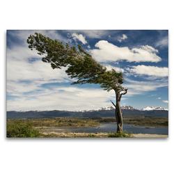 Premium Textil-Leinwand 120 x 80 cm Quer-Format Patagonische Winde in Tierra Del Fuego | Wandbild, HD-Bild auf Keilrahmen, Fertigbild auf hochwertigem Vlies, Leinwanddruck von Teresa Schade
