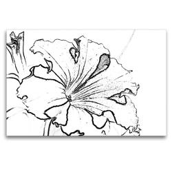 Premium Textil-Leinwand 120 x 80 cm Quer-Format Petunie in Schwarz Weiß. | Wandbild, HD-Bild auf Keilrahmen, Fertigbild auf hochwertigem Vlies, Leinwanddruck von Marlise Gaudig