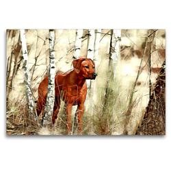 Premium Textil-Leinwand 120 x 80 cm Quer-Format Rhodesian Ridgeback Hündin afrikanischer Löwenhund | Wandbild, HD-Bild auf Keilrahmen, Fertigbild auf hochwertigem Vlies, Leinwanddruck von Dagmar Behrens
