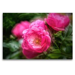 Premium Textil-Leinwand 120 x 80 cm Quer-Format Romantische Rosenblüten   Wandbild, HD-Bild auf Keilrahmen, Fertigbild auf hochwertigem Vlies, Leinwanddruck von Nicc Koch