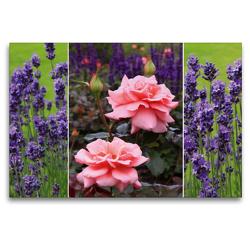 Premium Textil-Leinwand 120 x 80 cm Quer-Format Rosen und Lavendel | Wandbild, HD-Bild auf Keilrahmen, Fertigbild auf hochwertigem Vlies, Leinwanddruck von SusaZoom