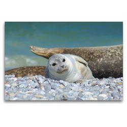 Premium Textil-Leinwand 120 x 80 cm Quer-Format Seehundbaby | Wandbild, HD-Bild auf Keilrahmen, Fertigbild auf hochwertigem Vlies, Leinwanddruck von Kattobello
