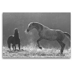 Premium Textil-Leinwand 120 x 80 cm Quer-Format Spiel im Morgenlicht | Wandbild, HD-Bild auf Keilrahmen, Fertigbild auf hochwertigem Vlies, Leinwanddruck von Meike Bölts