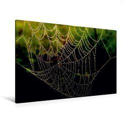 Premium Textil-Leinwand 120 x 80 cm Quer-Format Spinnennetz im Morgentau | Wandbild, HD-Bild auf Keilrahmen, Fertigbild auf hochwertigem Vlies, Leinwanddruck von Heike Hultsch von Hultsch,  Heike