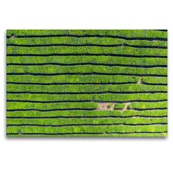 Premium Textil-Leinwand 120 x 80 cm Quer-Format Teeplantage auf Mauritius   Wandbild, HD-Bild auf Keilrahmen, Fertigbild auf hochwertigem Vlies, Leinwanddruck von Rolf Dietz