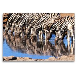 Premium Textil-Leinwand 120 x 80 cm Quer-Format Trinkende Zebras im südlichen Afrika | Wandbild, HD-Bild auf Keilrahmen, Fertigbild auf hochwertigem Vlies, Leinwanddruck von Birgit Scharnhorst