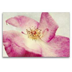 Premium Textil-Leinwand 120 x 80 cm Quer-Format Vintage Rose | Wandbild, HD-Bild auf Keilrahmen, Fertigbild auf hochwertigem Vlies, Leinwanddruck von Angela Dölling