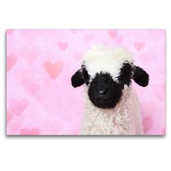 Premium Textil-Leinwand 120 x 80 cm Quer-Format Walliser Schwarznasenschaf | Wandbild, HD-Bild auf Keilrahmen, Fertigbild auf hochwertigem Vlies, Leinwanddruck von Jeanette Hutfluss