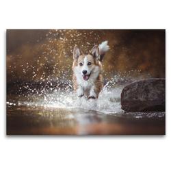 Premium Textil-Leinwand 120 x 80 cm Quer-Format Wasseraction mit Welsh Corgi Molly | Wandbild, HD-Bild auf Keilrahmen, Fertigbild auf hochwertigem Vlies, Leinwanddruck von Maria Ahrens