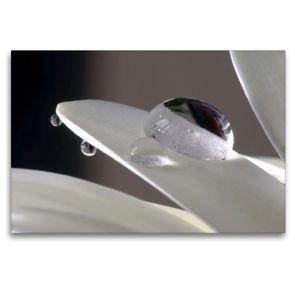 Premium Textil-Leinwand 120 x 80 cm Quer-Format Wassertropfen auf dem Blatt einer weißen Margerite | Wandbild, HD-Bild auf Keilrahmen, Fertigbild auf hochwertigem Vlies, Leinwanddruck von Susanne Herppich