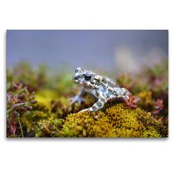 Premium Textil-Leinwand 120 x 80 cm Quer-Format Wechselkröte | Wandbild, HD-Bild auf Keilrahmen, Fertigbild auf hochwertigem Vlies, Leinwanddruck von GUGIGEI
