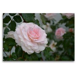 Premium Textil-Leinwand 120 x 80 cm Quer-Format Zarte Schönheiten – Bezaubernde Rosenblüten | Wandbild, HD-Bild auf Keilrahmen, Fertigbild auf hochwertigem Vlies, Leinwanddruck von Bianca Schumann