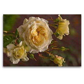 Premium Textil-Leinwand 120 x 80 cm Quer-Format Zauberhafte Rosen | Wandbild, HD-Bild auf Keilrahmen, Fertigbild auf hochwertigem Vlies, Leinwanddruck von Andrea Potratz