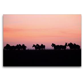 Premium Textil-Leinwand 120 x 80 cm Quer-Format Zebras in der Masai Mara | Wandbild, HD-Bild auf Keilrahmen, Fertigbild auf hochwertigem Vlies, Leinwanddruck von Michael Herzog