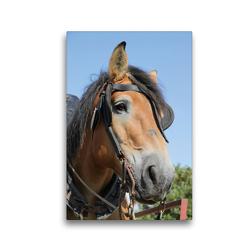 Premium Textil-Leinwand 30 x 45 cm Hoch-Format Ardenner-Porträt | Wandbild, HD-Bild auf Keilrahmen, Fertigbild auf hochwertigem Vlies, Leinwanddruck von Antje Lindert-Rottke