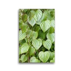 Premium Textil-Leinwand 30 x 45 cm Hoch-Format Blätter der Yamswurzel | Wandbild, HD-Bild auf Keilrahmen, Fertigbild auf hochwertigem Vlies, Leinwanddruck von Gisela Kruse