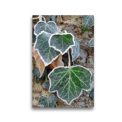 Premium Textil-Leinwand 30 x 45 cm Hoch-Format Efeu mit Raureif | Wandbild, HD-Bild auf Keilrahmen, Fertigbild auf hochwertigem Vlies, Leinwanddruck von Sabine Löwer