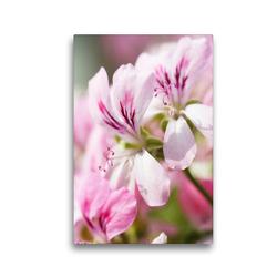 Premium Textil-Leinwand 30 x 45 cm Hoch-Format Geranienblüten | Wandbild, HD-Bild auf Keilrahmen, Fertigbild auf hochwertigem Vlies, Leinwanddruck von Gisela Kruse